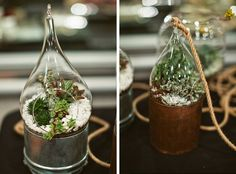 Succulent and terrariums by Lila B floral design, Viansa Winery photos by Sonoma wedding photographer, Tinywater Photography