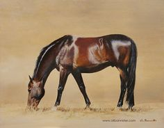 CALYPSO GRAZING. Oil on board by Ali Bannister. This study of 'Con Calypso' grazing was bought as a surprise present for Calypso's owner (who puts in a lot of time making him shine like that!)  For limited edition prints and information on commissions see: www.alibannister.com.'