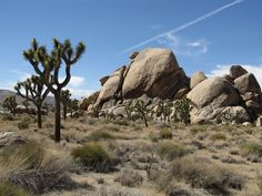 The National Park Service is 100 years old, and a lot of its parks are dying.