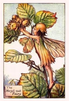 The HAZEL-NUT Fairy ~ Cicely Mary Barker ~