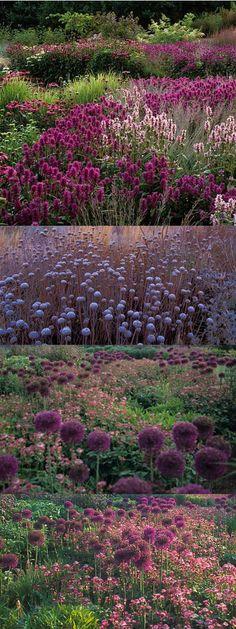 garden shrubs for wildlife Prairie Garden, Meadow Garden, Garden Cottage, Dream Garden, Garden Shrubs, Garden Landscaping, Garden Borders, Natural Garden, Colorful Garden