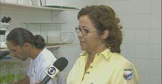 Saúde encontra larvas do Aedes aegypti em 409 casas de Vinhedo