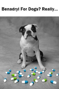 Benadryl For Dogs.... Coco takes a benadryl almost every day for her allergies