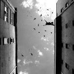 Para Manzano, los aforismos son sentencias breves que resumen su reflexión y observación de diversos aspectos de la vida.