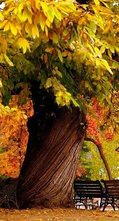 What a wonderful tree. It seems like it's from a fairy tale with its twisted…