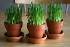 How woofing cute is this? If you're looking for a totally dog friendly Easter decor idea, try these planters with wheatgrass growing inside. Paint the planters in Easter Pastels or even plant your seeds in plastic lined Easter Baskets.