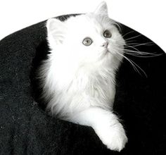 Best Cat Cave Bed, Unique Handmade Natural Felted Merino ... https://www.amazon.com/dp/B01637YYPA/ref=cm_sw_r_pi_dp_x_F1pZyb3RCMHJ1