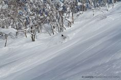 Niseko has the best lift accessible Backcountry Powder on the Globe..The water content of the snow is usually around 8% creating extremely light n fluffy powder snow.... Niseko ニセコ Siberian Peninsula snow storms deliver up to 18 metres of dry powder a season. #niseko #japow #snow #skijapan #skiing #snowboarding #backcountry #japan Skiing In Japan, Snow Storms, Snowboarding, Globe, Powder, Content, Winter, Outdoor, Snow Board
