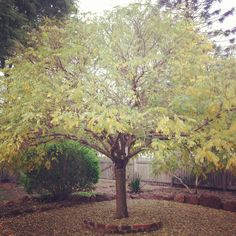Tree Of Life Lorna Henson photographer