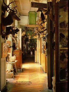 The Last Taxidermist in Paris - article from the January 1985 issue of World of Interiors magazine about Deyrolle, the historic taxidermy shop and natural history emporium. http://www.cultofweird.com/blog/last-taxidermist-deyrolle-paris/