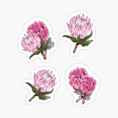 Cool Stickers, Funny Stickers, School Accessories, Print Store, Glossier Stickers, Gifts For Girls, Greeting Cards, Fine Art Prints, Club