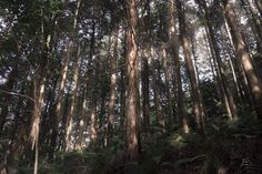 Among Trees Photo by Keiju Kubo — National Geographic Your Shot