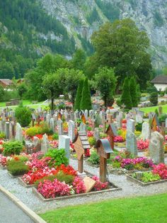 Flower beds filling each burial plot in cemeteries in Switzerland and other European cities and areas too.  #Swiss #lovely #flowers