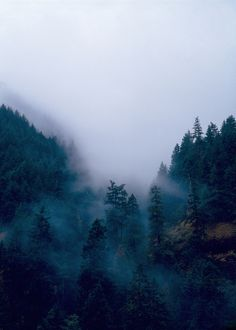 It's Really Amazing The Way Fog Or Mist Can Instantly Change The Mood Of A Photo.