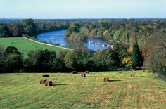 Richmond Hill has become most fascinating home destination in canada due to its culture and world class amenities. Check out some of the most amazing facts about Richmond Hill. Richmond Upon Thames, Richmond Park, Richmond Hill, Marriott Hotels, Kew Gardens, River Thames, London Calling, British Isles, Great Britain