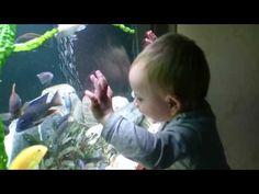 Наш малыш и малавийские цихлиды