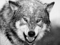 fotos en blanco y negro de animales - Buscar con Google