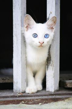 Qual é o Gatinho Mais Fofinho Desse Mundo? http://wnli.st/1MuBaBm #Gato #Fofo