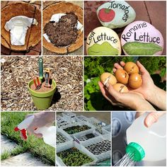 13 Money Saving Gardening Hacks