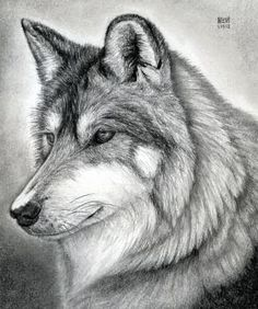 How to Draw a Wolf Head, Mexican Wolf, Step by Step, forest animals, Animals, FREE Online Drawing Tutorial, Added by finalprodigy, January 15, 2012, 11:39:18 pm
