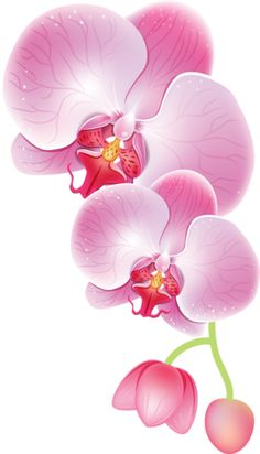 Seven Common Misconceptions About Orchid Tattoo Black And White Art Floral, Fabric Painting, Painting & Drawing, Watercolor Flowers, Watercolor Paintings, Orchid Drawing, Orchids Painting, Images D'art, Impressions Botaniques