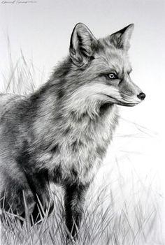 """Fox In Grass""- Karmel Timmons"