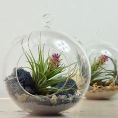 Air Plant Terrarium// Large Glass Orb// Grey// by PinkSerissa