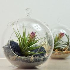 Air Plant Terrarium// Large Glass Orb// Grey// by PinkSerissa
