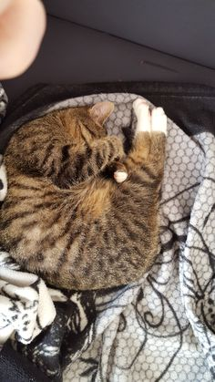Mali Katze | Pawshake