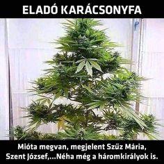 Haha, Life Hacks, Herbs, Christmas Tree, Marvel, Holiday Decor, Funny, Plants, Quotes
