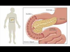 alimentos que hacen dano para el acido urico aliviar dor gota joelho dieta para la gota o control del acido urico