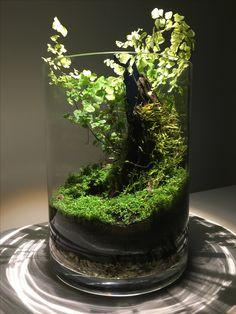 You can make some really cool designs with small bowls - aquascaping Terrarium Jar, Terrarium Plants, Succulent Terrarium, Aquarium Garden, Planted Aquarium, Aquarium Fish, Little Gardens, Small Gardens, Indoor Water Garden