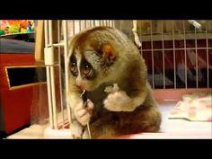Risultati immagini per animali coccolosi