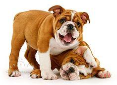 happy little #Bulldogs