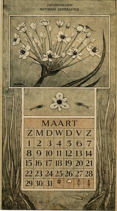 Le Roy, Charles, illustrator. March. Botanische kalender (Dutch botanical calendar). 1925.