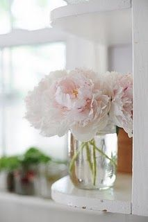 Pink Peonies... Can't wait for these... Favorite flower ❤