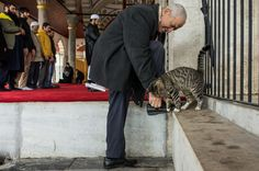 World Cat Day at the Mihirimah Sultan Mosque