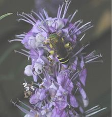 A new study using Vitex (Chasteberry) for PMS just came out in Acta Medica Iranica titled Therapeutic effect of Vitex agnus castus in patients with premenstrual syndrome.