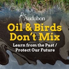 The National Audobon Society marks the second anniversary of the BP Deepwater Horizon oil spill. The Gulf still needs help recovering. Visit the Audobon's site for how you can help this week.