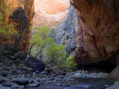 If you haven't hiked through Zion National Park, then you need to.