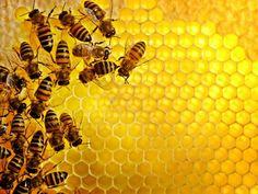 Home | West Coast Honey