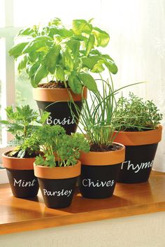 Revamp old Terracotta pots with Chalkboard spray paint. Perfect for creating a stylish herb garden in your kitchen. #herbs