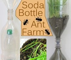Soda Bottle Ant Farm: 10 Steps (with Pictures) Farm Projects, Science Projects, School Projects, Ant Crafts, Crafts For Kids, Insect Crafts, Summer Crafts, Ant Habitat, Maila