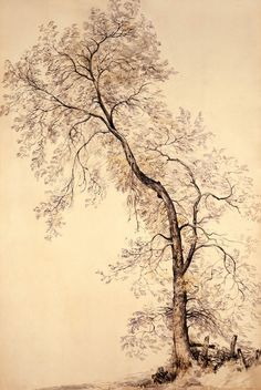 John Constable drawing Tree
