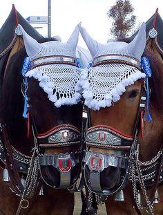 Horses on the Oktoberfest I