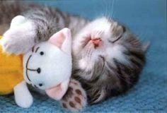 Cute Kitten Sleeps with Toys