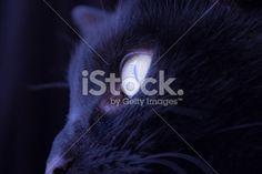 Fotografía Gema Ibarra: Cat Eye - Imagen de stock