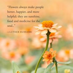 Nature Quote Nature Quote The post Nature Quote appeared first on Diy Flowers. Short Flower Quotes, Beautiful Flower Quotes, Flower Quotes Inspirational, Flowers Quotes Tumblr, Flower Qoutes, Citation Nature, Cute Quotes For Instagram, Flowers Wallpaper, Affirmations