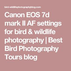 Canon EOS 7d mark II AF settings for bird & wildlife photography | Best Bird Photography Tours blog