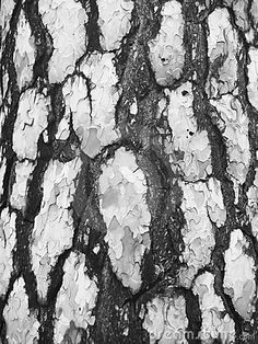 http://www.bing.com/images/search?q=black pine bark